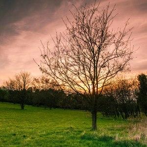 Slnko za stromom