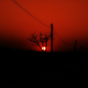 strom v červenom