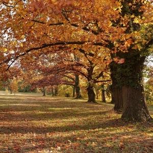 Pod klenbou stromov