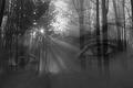 Oči v tajomnom lese Ťa vidia
