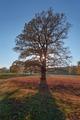 Strom s hviezdou