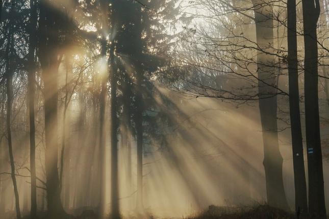 Čary lesa