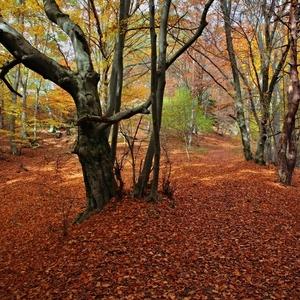 Lesným chodníkom ...