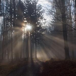 Svetlo v hmlách