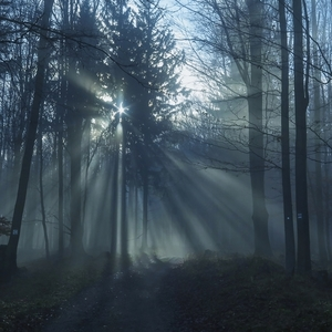 V tajomnom lese