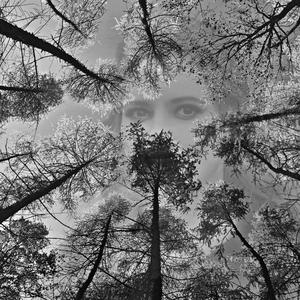 Tajomné oči v lese
