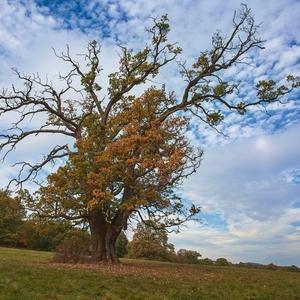 Jesene života stromu