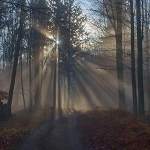 Svetlo v hmle