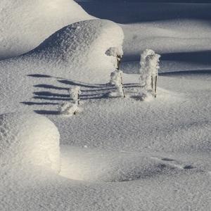Tiene na snehu