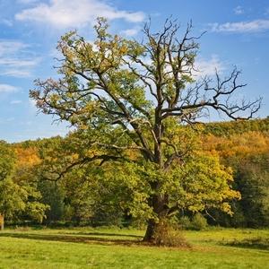 Stromy v jeseni