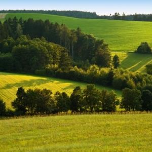 Zelená v zelenej