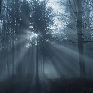 Cesta tajomným lesom