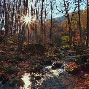 Slnko nad potokom