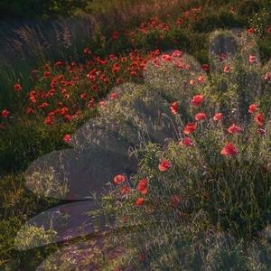 Kvety na kvete
