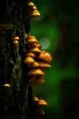 V tmavom lese