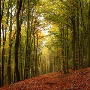 Jesenný les II.