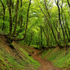 Do hlbín lesa