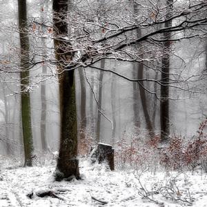 Les v zime