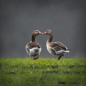 Spolu
