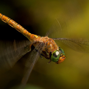 Letiaca vážka I.