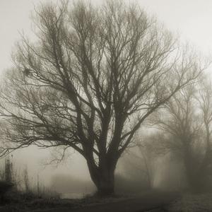 Zimné ráno II.