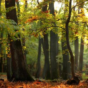 Večerný les