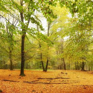 Zlatý les I.