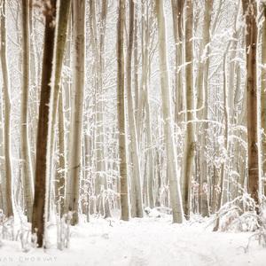 Kráľovstvo zimy
