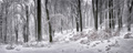 Magická zima