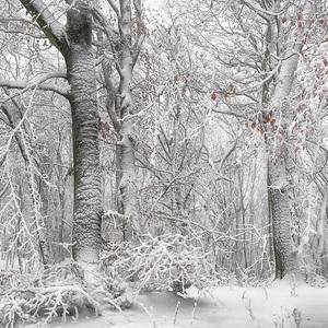 Vianočný les