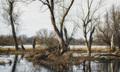 Jarné záplavy na rieke Morave