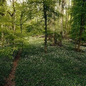 Rajská záhrada