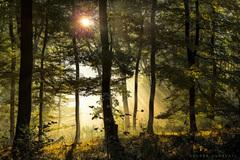 Ráno v jesennom lese