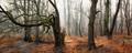 Dolný les