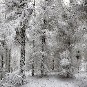 Čierno-biely les