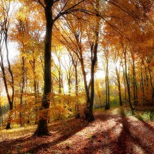 Zlatý les II.
