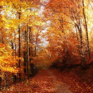 Zlatý les III.