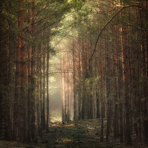 Mladý les