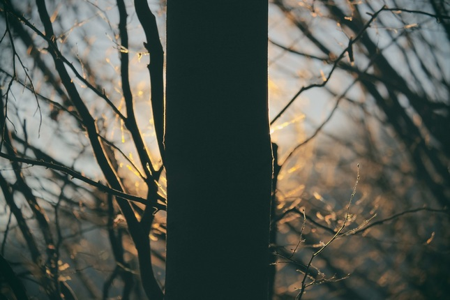 za stromom