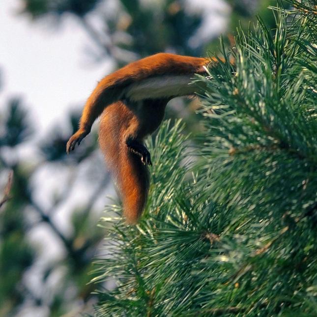 hop do stromu