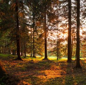 Lesný  západ slnka