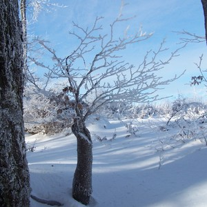 Priroda v zime