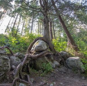 Strom vs kameň