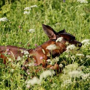 Radosť v tráve