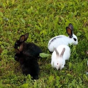 Hrátky v tráve