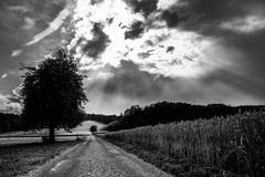 cestička k lesu