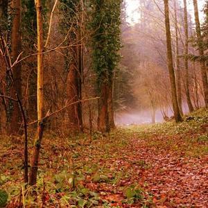čarovný les...