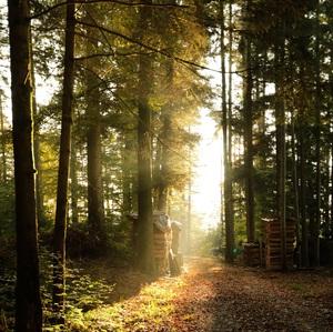 jesenna atmosfera