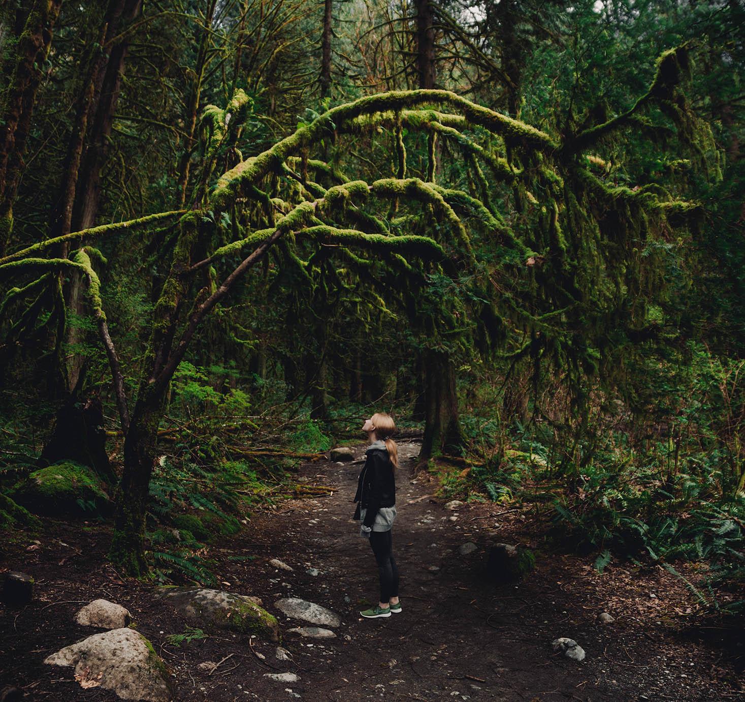 Kanadským lesom