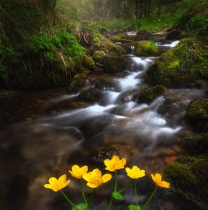Jarný potok